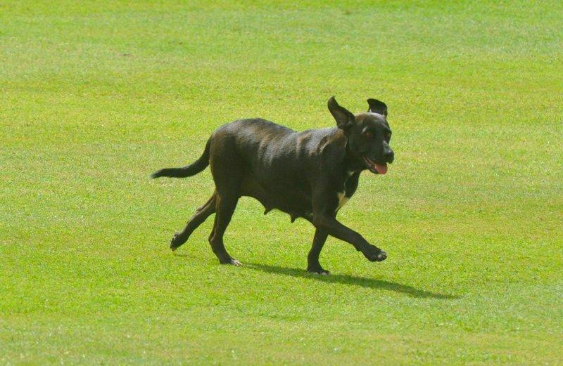 Colonial - dog.jpg